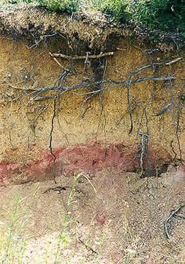 soilprofile